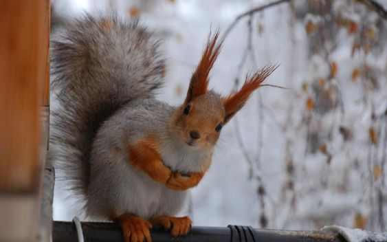 More and more squirrels <3