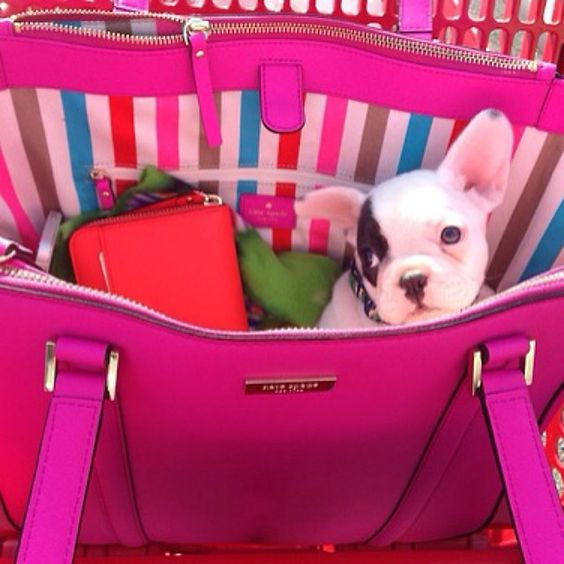 It doesn't get much better than Kate spade and puppies #katespade #puppies #preppy #tsm #pink #bowspearls&sororitygirls