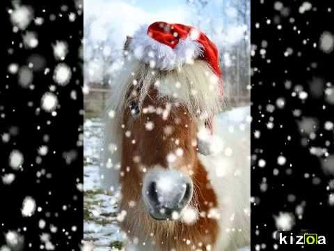 Kizoa Video Maker: *Crazy Pets* Weihnacht...