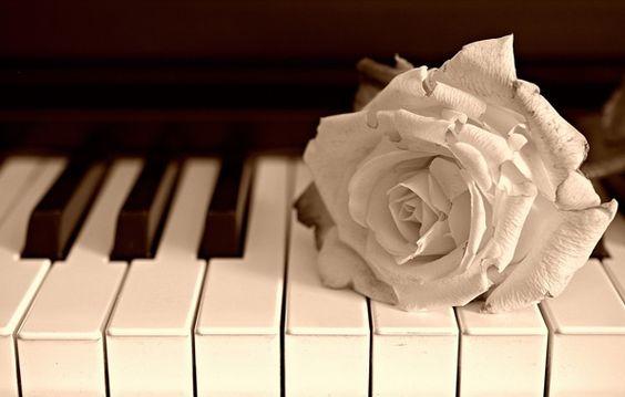 Wallpaper flower, rose, piano, music