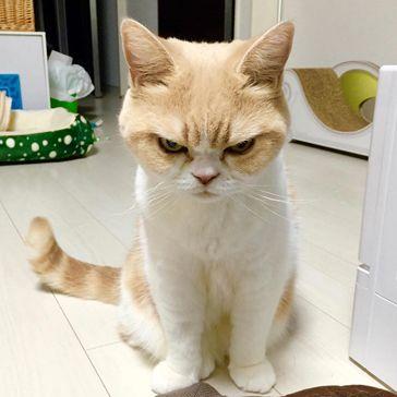 Internet Meet Koyuki, Your New Frowny Cat: