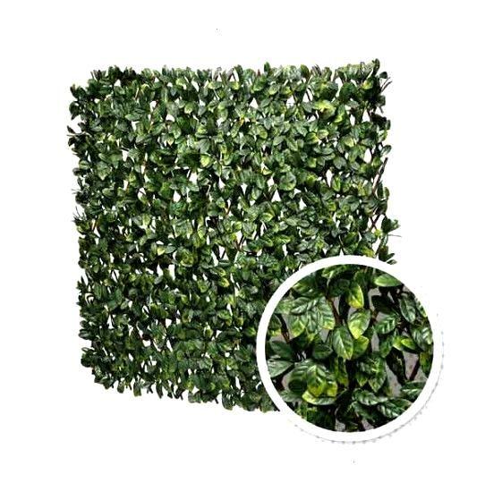 Extensible Treillis Feuilles Longueur Laurier Amande Loisir Atout De 12 M Treillis Extensible Feuilles De Laurie In 2020 Drying Herbs How To Dry Basil Herbs
