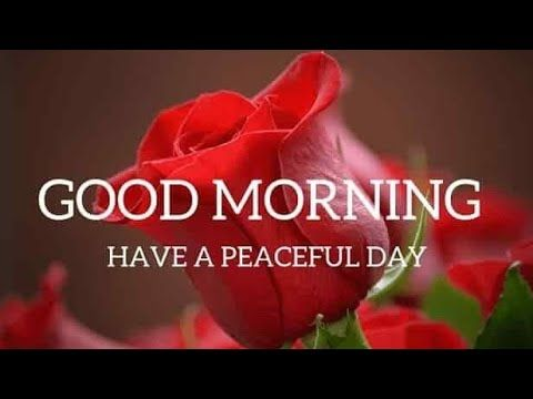 Good Morning Video For Whatsapp Good Morning Whatsapp Status Good Morning Wallpapers Photo Yo Good Morning Beautiful Good Morning Images Good Morning Gif