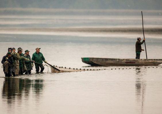 Pesca tradicional de la carpa