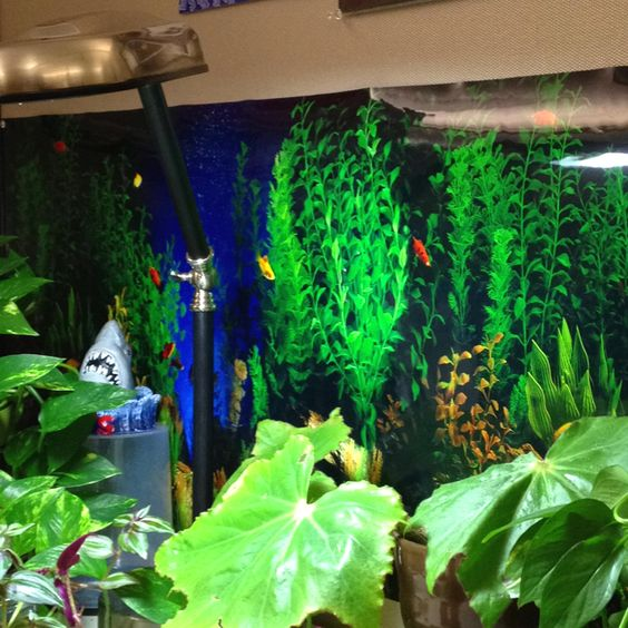 Office cube decorative -- go to pet store and buy aquarium background.  The colors are so vibrant.