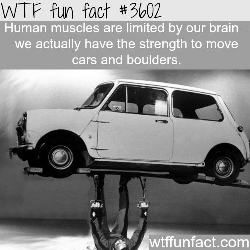 the real strength of the human muscles - wtf fun facts | wtf facts, Muscles
