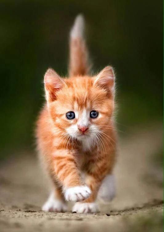 Et L Autre T As Vu Moi J Avance Meme Que C Est Meme Pas Difficile Kittens Kittens Cutest Cute Cats Cats