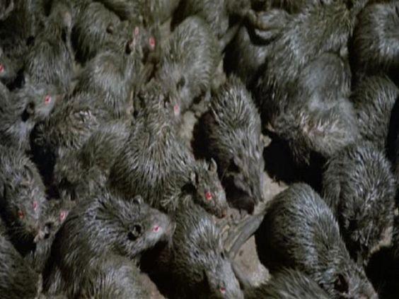 Dịch vụ diệt chuột hiệu quả tại Ánh Dương Hà Nội