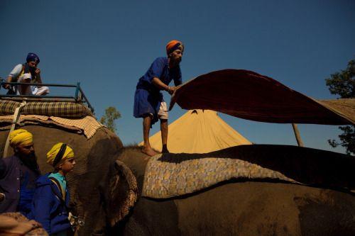 A Singh Saddling up the elephants for Holla Mohalla at Sri Anandpur Sahib.