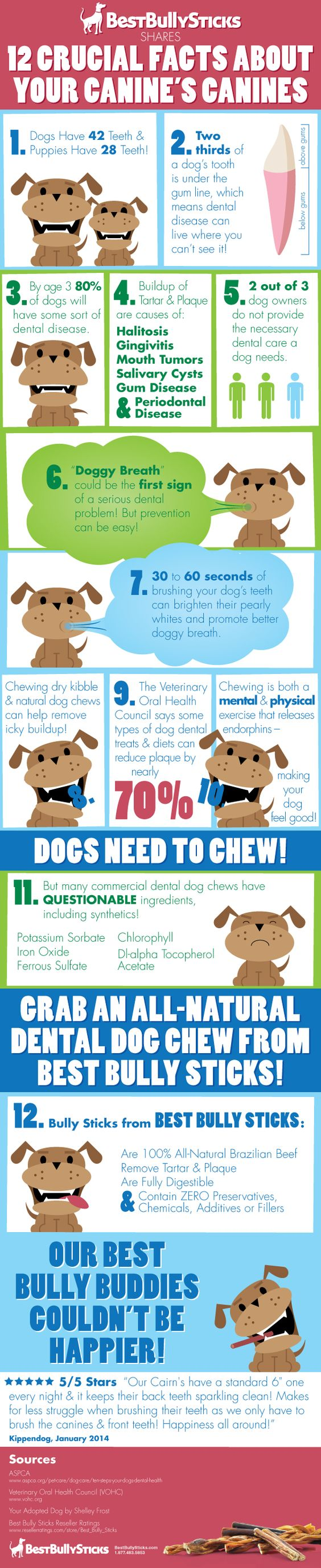important facts about dog dental health chewchallenge bully sticks health and facts. Black Bedroom Furniture Sets. Home Design Ideas