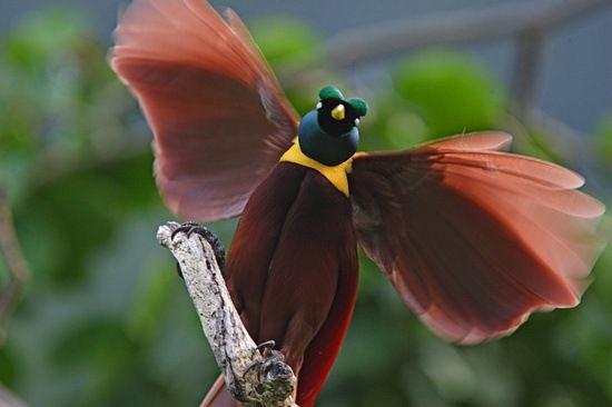 Frequência X: Belas fotos de pássaros raros