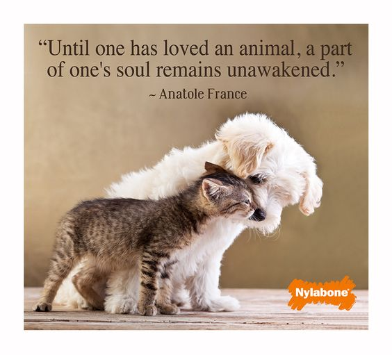 RePin this on #pinterest if your #pet makes your life complete! #dogs #cats