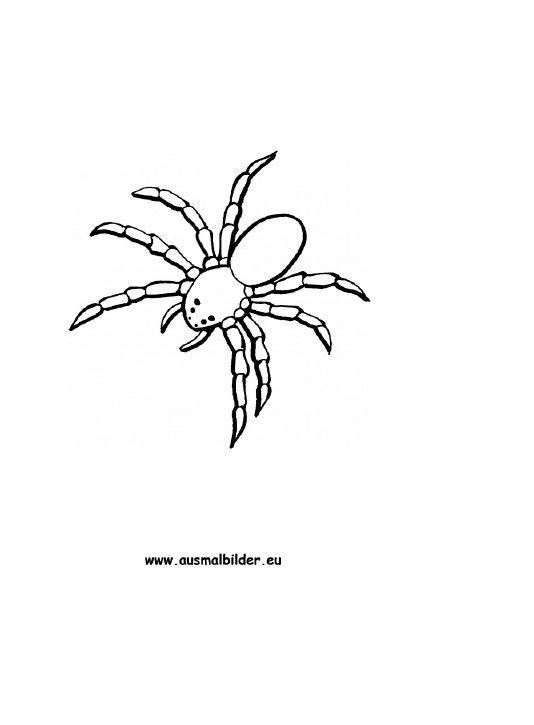 Die Besten Ideen Fur Ausmalbilder Spinne