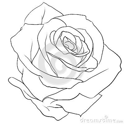 rose budding outline - Google Search | Tattoo ideas ...