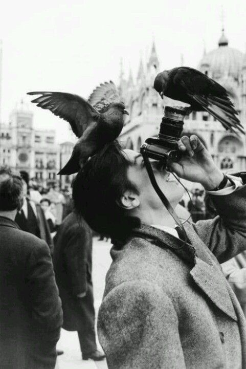 Alain Delon photographié par Robert Doisneau à la Place Saint-Marc en 1962.