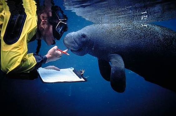 Become A Marine Biologist  Bucket List    Marines And