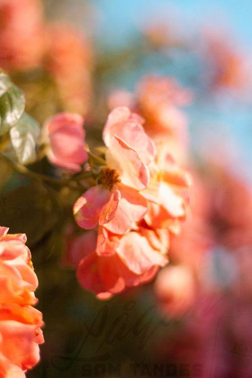 Salmon Colored Herringbone Blazer: Pinterest • The World's Catalog Of Ideas