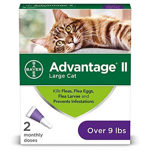 10 Best Cat Flea Tick Control Updated Mar 2020