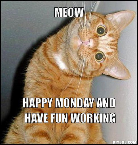 happy meowday the chronic catnip company