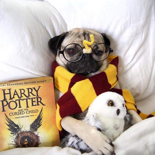 45 Epic Dog Halloween Costume Ideas 2020 Guide Harry Potter