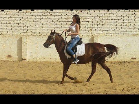 اغرب 10 طرق ركوب غريبة Animals Horses Haifa Wehbe