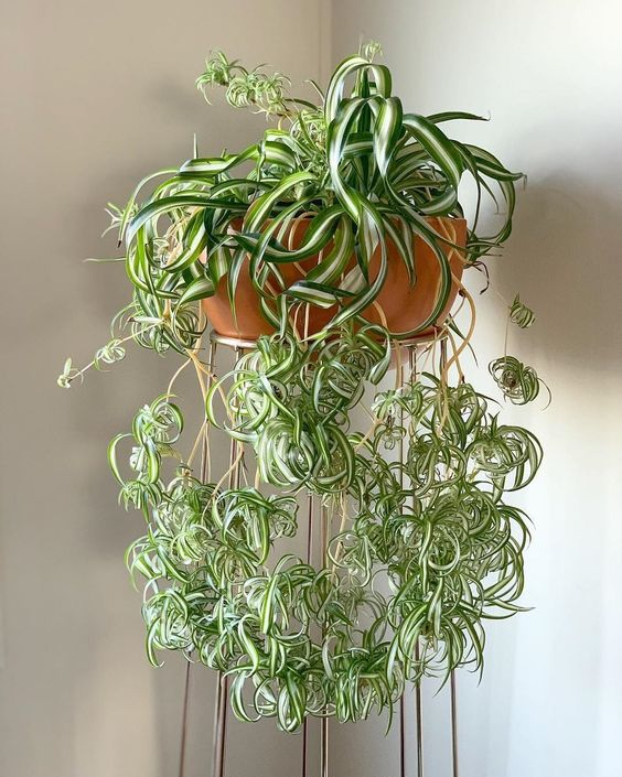 houseplants good addition to your home