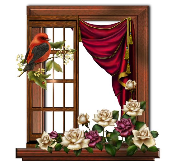 window stock 29 by collect-and-creat