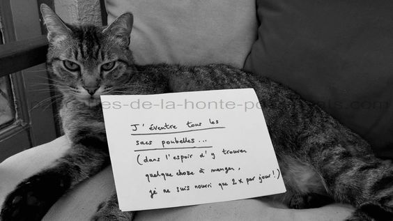 « I eviscerate all garbage bags… (because I hope to find something to eat, I fed only twice a day ! » #lolcats #shameyourpet #shameyourcat #cat #cats #chats