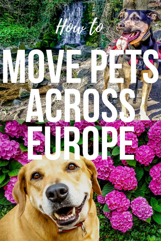 We All Love Our Pets But They Don T Make It Very Easy To Move From One Country To Another Luckily We Ve Managed To Travel With Our Trip Living Abroad Travel