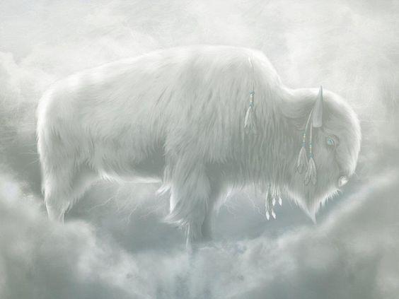Sacred White Buffalo Woman   White Buffalo Calf Woman -1417