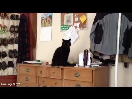 Cat is a Jerk