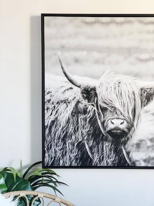 Our Scottish Highland Cow Canvas Is The Statement Wall Art You Ve Been Looking For In A Stylish Highland Cow Canvas Cow Canvas Scottish Highland Cow