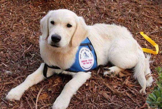 psychiatric service dog breeders