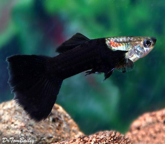 Pinterest the world s catalog of ideas for Fish breeding net