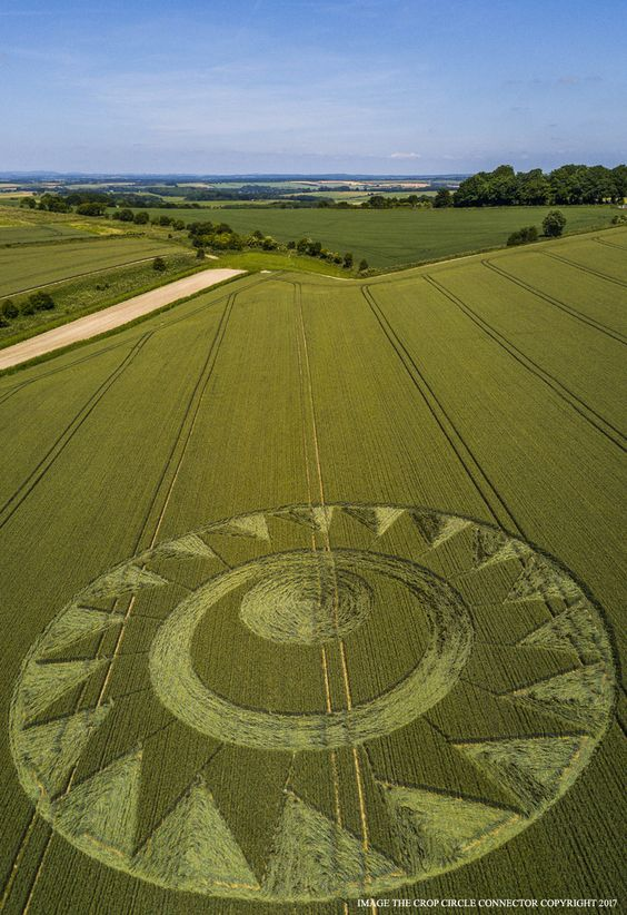 Crop Circle at Cheesefoot Head, Nr Winchester, Hampshire. Reported 17th June 2017