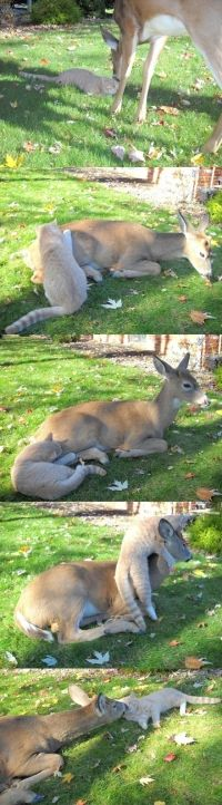 BFF: Cat  Deer. . .sometimes, I think animals are much smarter than humans