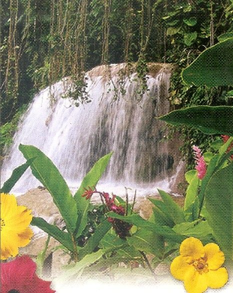 enchanted garden jamaica and gardens on pinterest