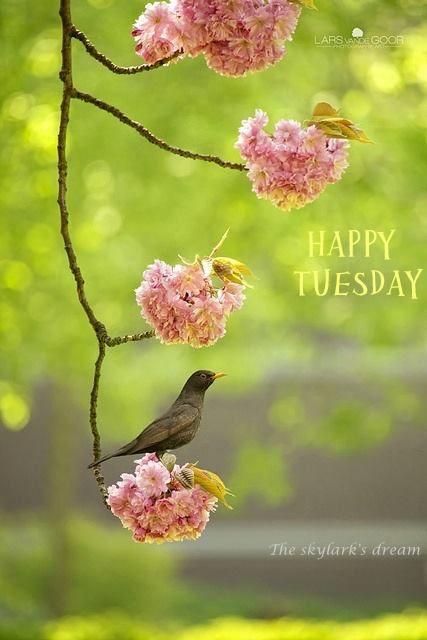 Happy Tuesday! ❤ï¸Â: