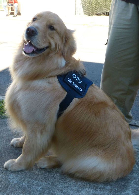 Olly - Therapy Dog - Super Paws Project