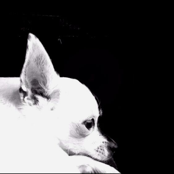 Pin By Steve Broggie On Worth 1000 Words Puppy Love Puppies