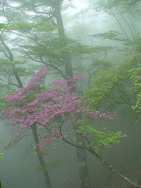 misty blossom wonderland