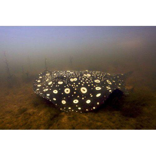 Blackwater Biotopes