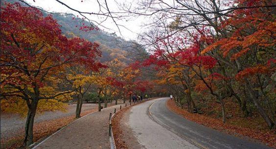 Naejangsan National Park, South Korea