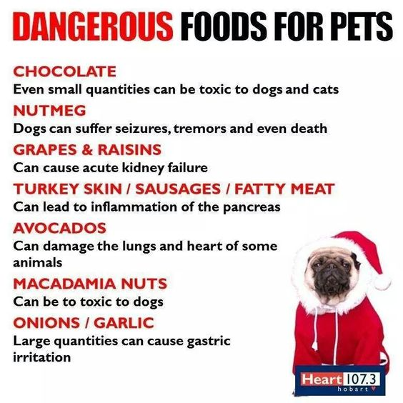 Bad For Cats And Dogs...