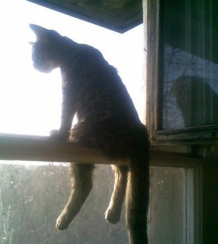 sittin' cat