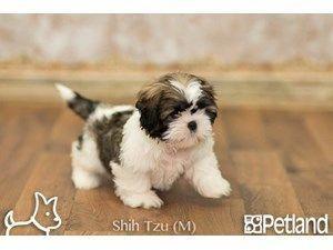 Puppies For Sale Petland Gallipolis Ohio Puppy Store