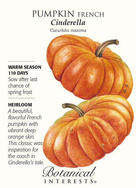 Cinderella French Pumpkin Seeds - 3 grams - Heirloom