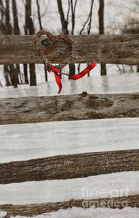 Heart-shape wreath with red ribbon on fence Photograph  - Heart-shape wreath with red ribbon on fence Fine Art Print