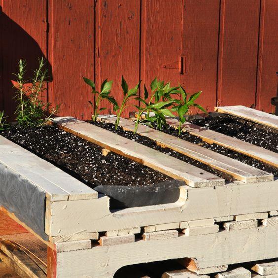 Urban Farming! Pallets! - Imgur