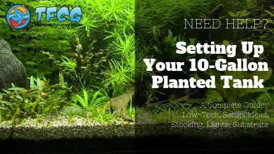 10 Gallon Planted Tank Low Tech Setup Ideas Stocking Lights Substrate Acuario
